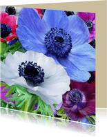 Mooie verjaardagskaart met Anemonen in diverse kleuren