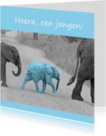 Felicitatiekaarten - Olifant baby blue