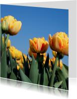 oranje tulpen in het veld 2
