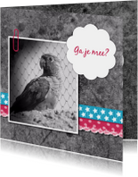 Papegaai met linten - DH