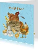 Pasen kip en kuikens