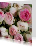 Ranonkel gekleurd roze wit