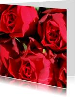 Rode rozen Anet Fotografie