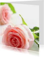 Romantische roze rozen