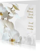 Rouw bedankt Orchidee - hemels wit