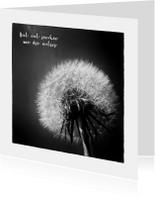 Condoleancekaarten - Rouwkaart Paardenbloem zww - OT