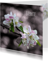 Condoleancekaarten - Rouwkaart sfeervolle bloemen