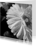 Rouwkaart witte bloem dauwdruppels - SK