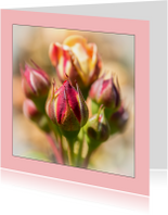 rozen knopje