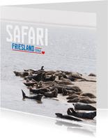 Safari Friesland Style