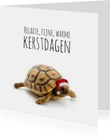 Schildpad met kerstmuts-isf