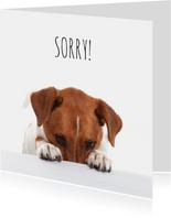 Sorry kaart - Boris de hond - Spijt