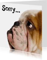 Sorry kaart met droevig hondje