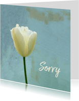 Sorry tulp - vergeving