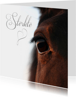 Sterkte close up paardenoog