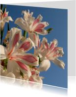 Sterkte kaart bloemen -LB