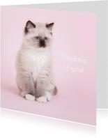 Thinking of you - kat - roze