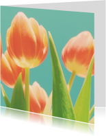 tulpen compositie
