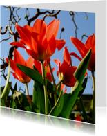 tulpen met hazelaar
