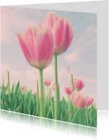 twee  zachte tulpen