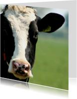 Typisch Hollands - koe