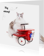 Vakantiekaart - Fly away kat