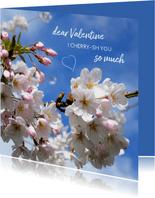 Valentine Cherry blossom
