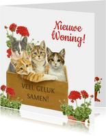 Verhuiskaart met katten in verhuisdoos