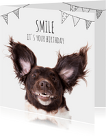 Verjaardag A doggy birthday smile!