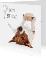 Verjaardag - Boris de hond met cadeautje