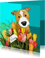 Verjaardag - hond met tulpen
