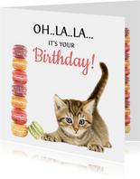 Verjaardagskaart Macarons Kitten