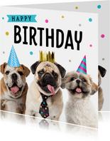 Verjaardagskaart met schattige hondjes