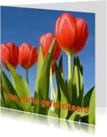 verjaardagskaart tulpen X -LB