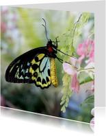 Vlinder geel zwart