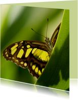 Vlinder kijkt je aan vanachter een blad