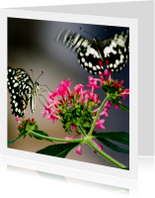 Vlinders op tak
