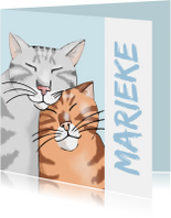 Vriendschap - twee katten voor jou