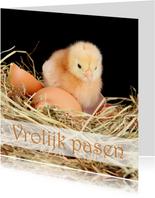 Vrolijk Pasen met Kuiken