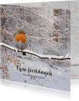 Winters bos met roodborst