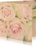 zachte rozen 2
