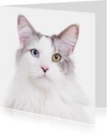 Zomaar een dierenkaart - Kat mooie ogen