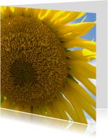 Zonnebloem uit frankrijk