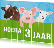 3 jaar koe varken en schaap