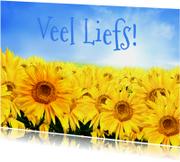 Bloemenkaart Liefs - BK