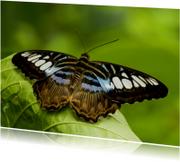 Bruin-blauw-witte vlinder