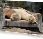 Dierenkaart zeeleeuwen