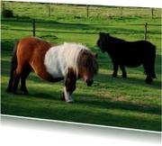 Fotokaart pony