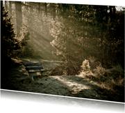 Leeg bankje in bos met zonnestralen