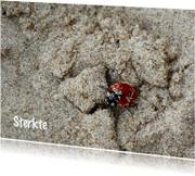 Lieveheersbeestje in het zand